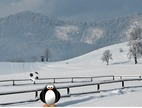 Football-me-nje-pinguin